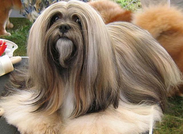 Самые красивые собаки на свете - ТОП 37 пород с фото и описанием
