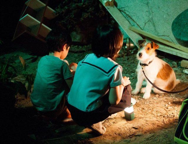 Фильм Как украсть собаку