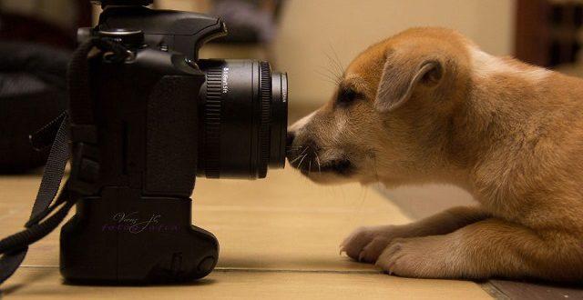 Изображение - лучшие фильмы про собак
