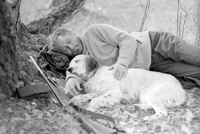 лучшие фильмы про собак 10