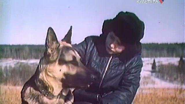 лучшие фильмы про собак 11