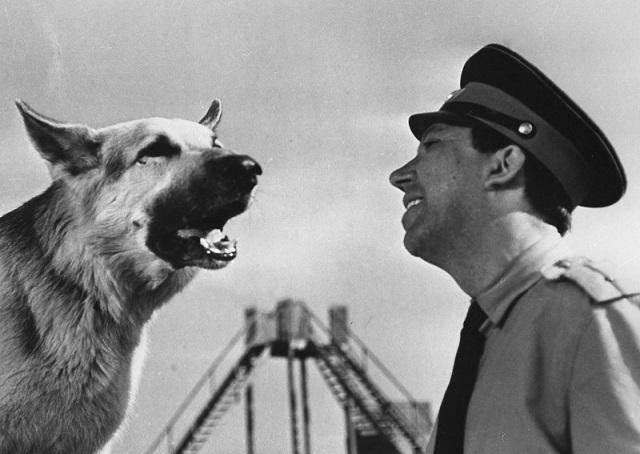 лучшие фильмы про собак 12