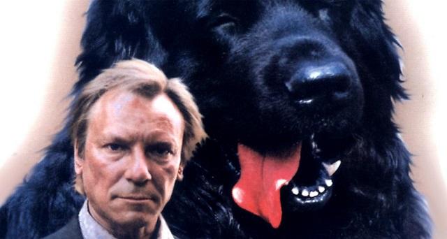 лучшие фильмы про собак 13