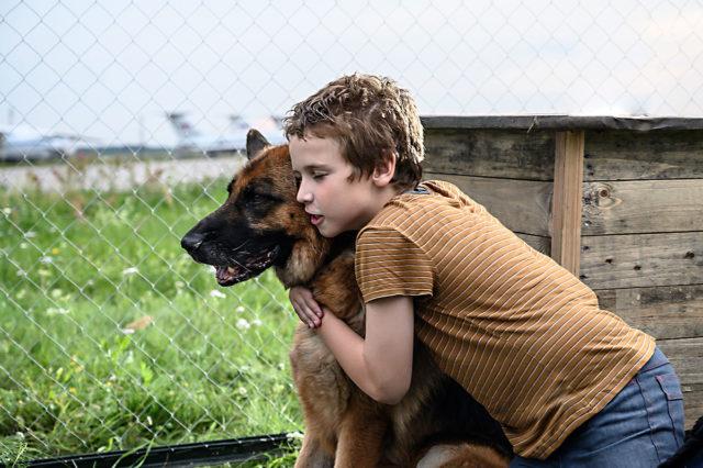 лучшие фильмы про собак 18