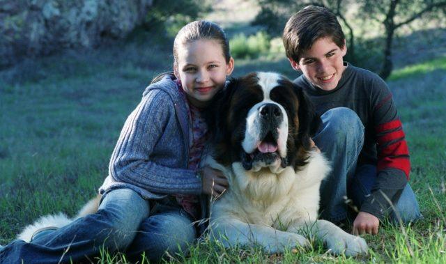 лучшие фильмы про собак 19