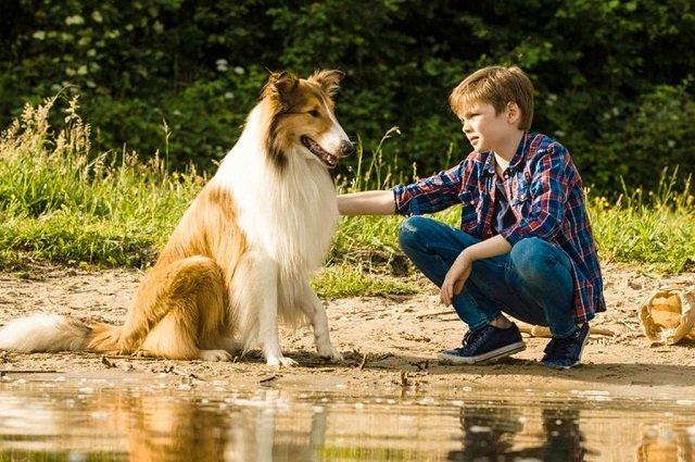 лучшие фильмы про собак 20