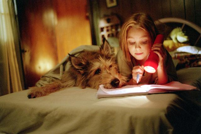 лучшие фильмы про собак 23