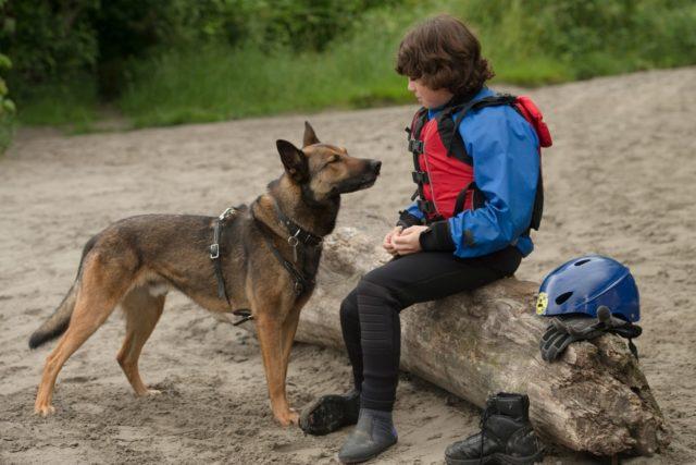 лучшие фильмы про собак 25
