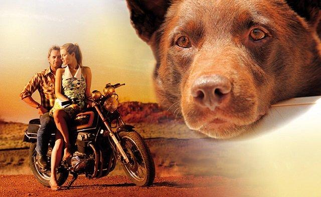 лучшие фильмы про собак 5